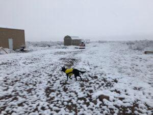 Diva in Snow